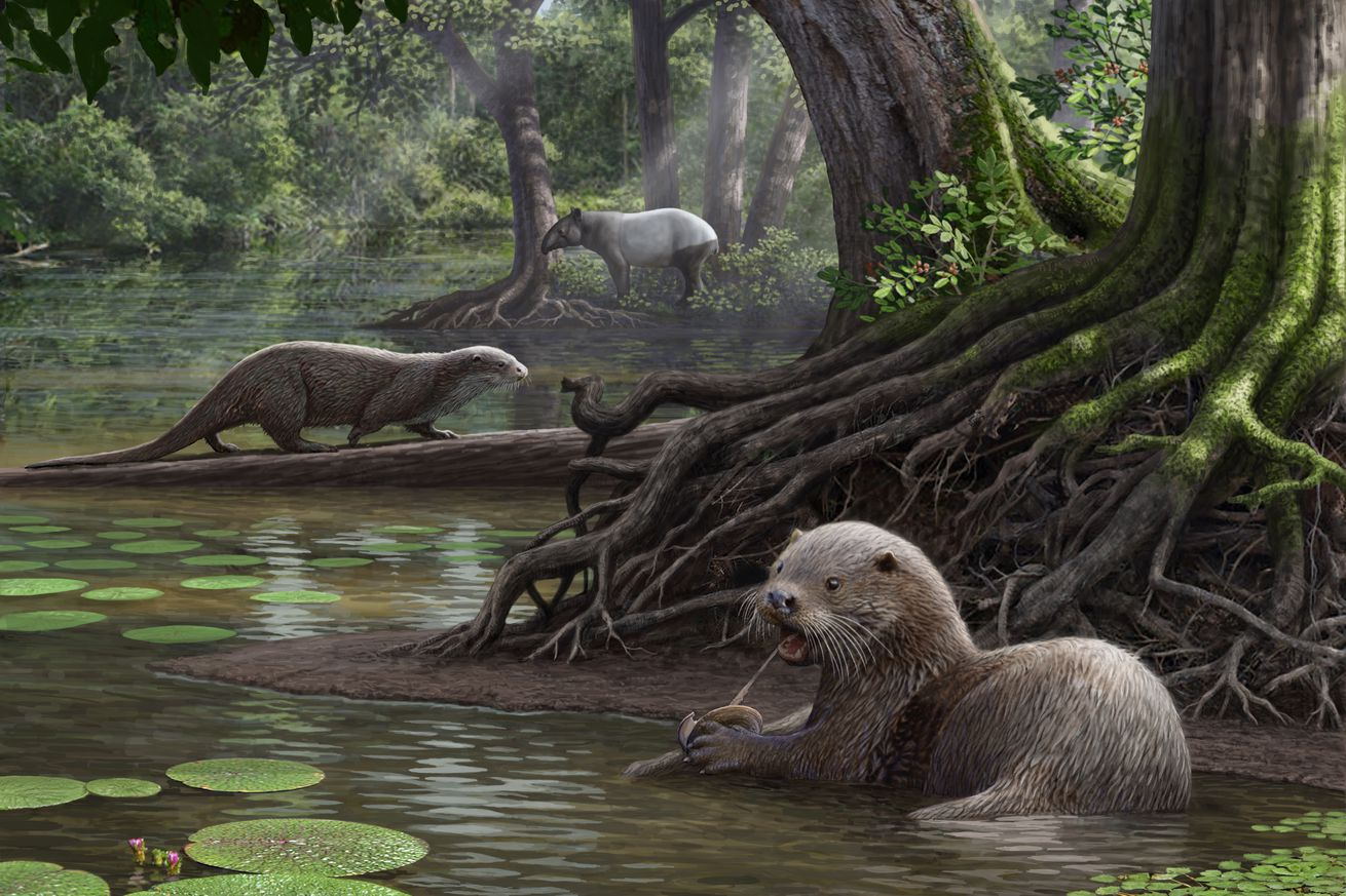 this massive extinct otter may have had a bone crushing bite