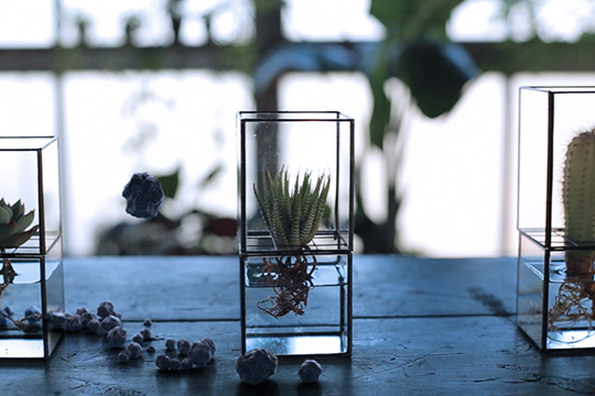 Sleek Hydroponic Terrariums Are Like Picture Frames For Plants The