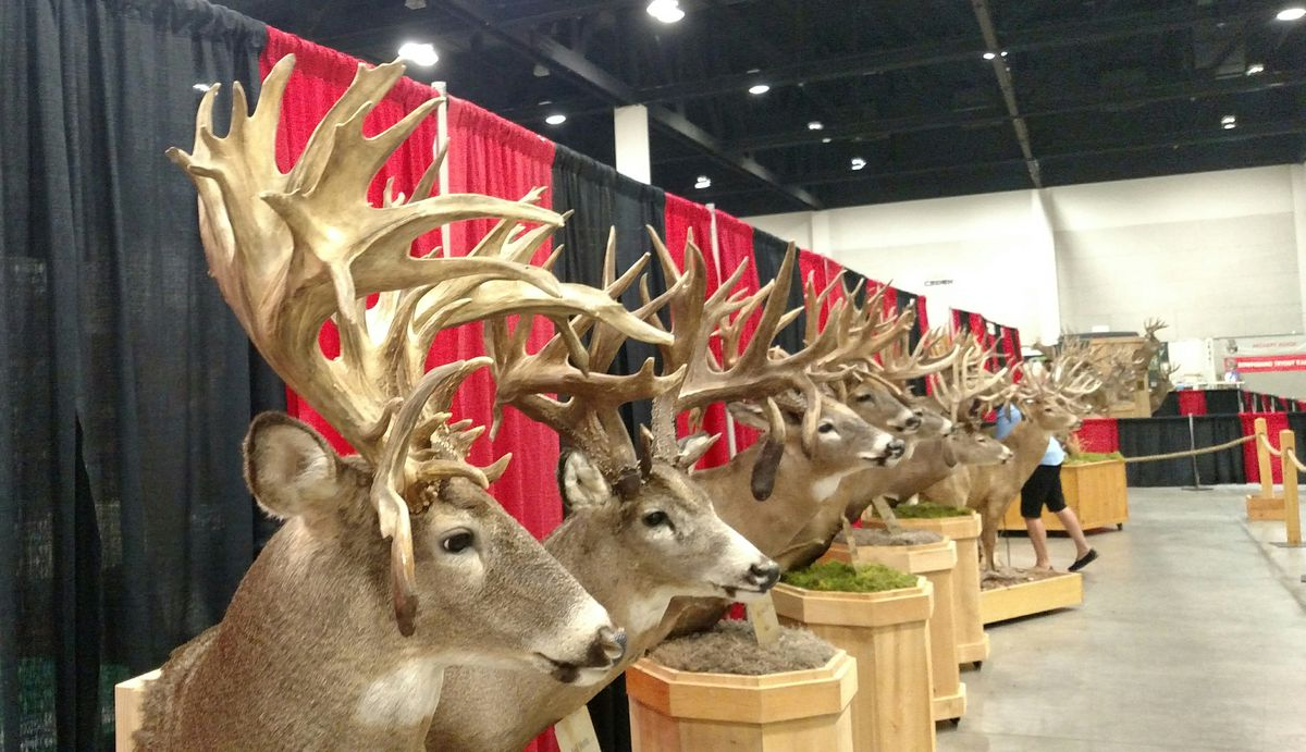 Whitetails of North America Record Deer Display.<br>Credit: Dale Bowman