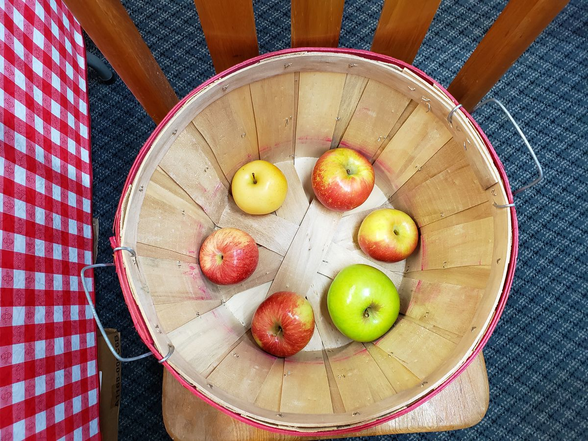 Six apples of varying sizes and varieties showcase sitting in a the bottom of a wooden baseket on a a wooden chair