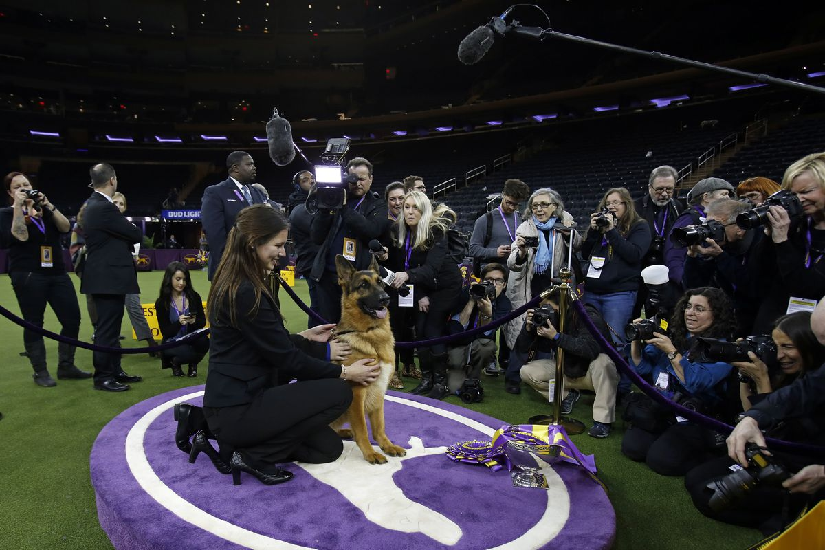 142nd Westminster Dog Show will feature Triangle judges