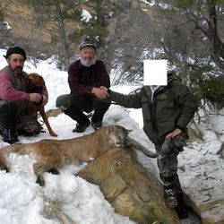 Marvin Ellis, an assistant hunting guide, (left) Christopher Loncarich, owner of Loncarich Guides and Outfitters based in western Colorado, pose with client on a mountain lion hunt. Both men pleaded guilty to federal charges connected to a mountain lion and bobcat poaching scheme along the Utah-Colorado border. More than 30 cats were killed illegally, many of which were held in leg traps or shot in the foot or stomach prior to guided hunts of unsuspecting clients. Utah, Colorado and federal wildlife conducted a joint investigation that resulted in federal charges against five people.