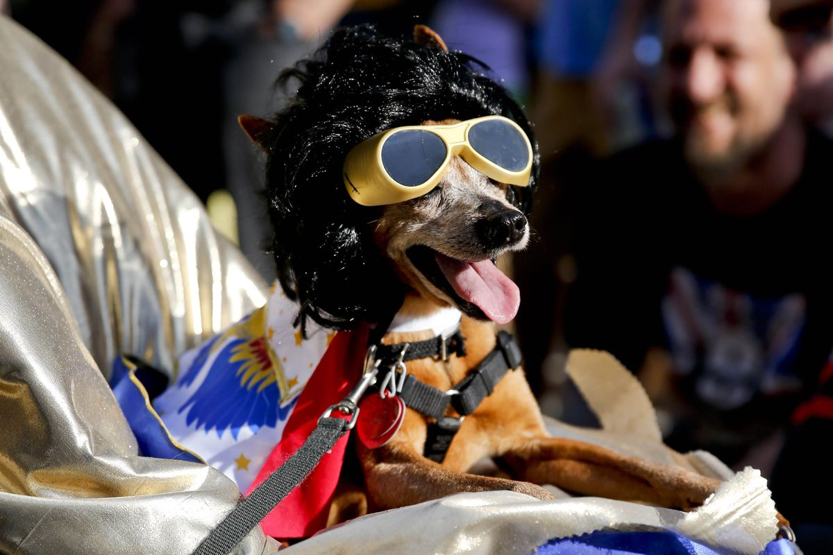 There are literally no photos of Samuel Galindo, so here is a wig-wearing dog with goggles