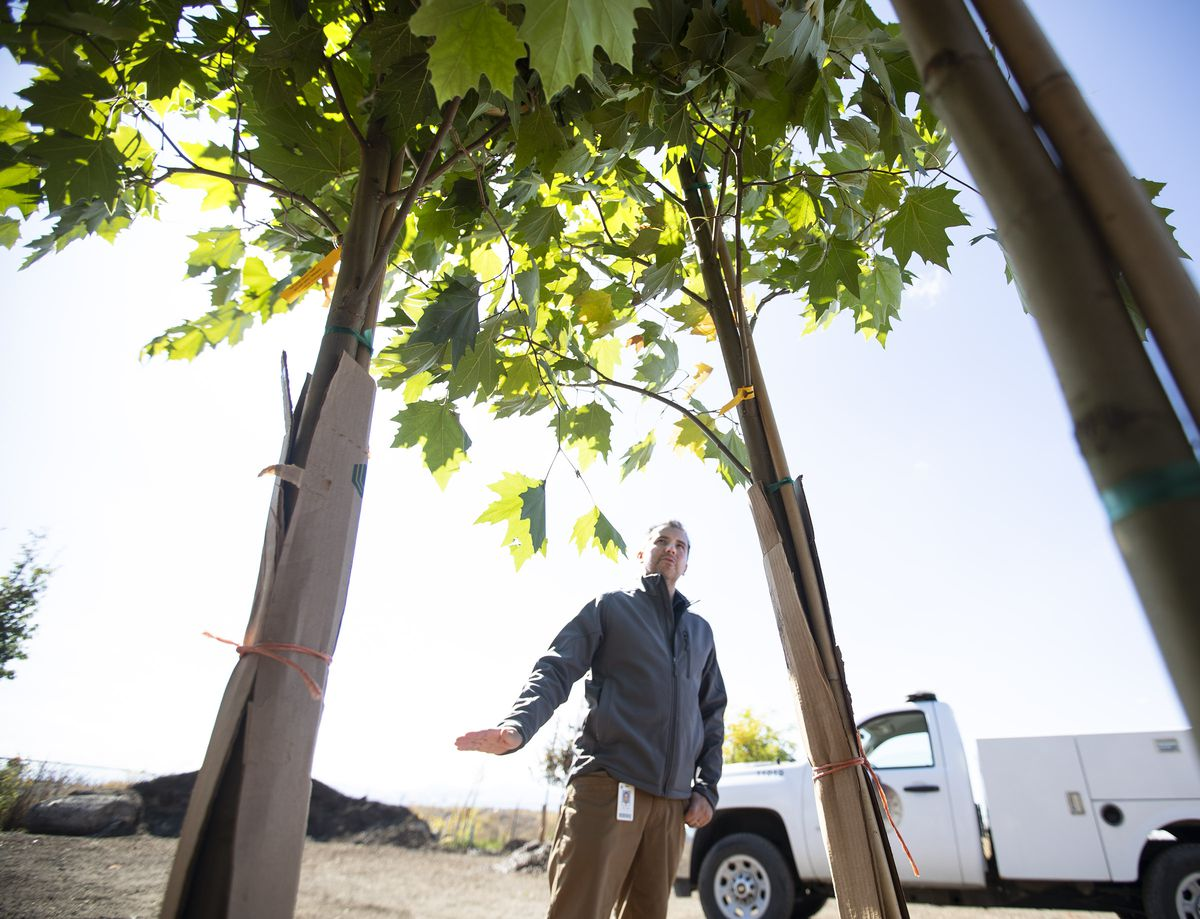 Tony Gliot, director of the Salt Lake City Urban Forestry Division, checks on a shipment of 190 new trees at the division's offices in Salt Lake City on Wednesday, Oct. 2, 2019. The trees will be planted in Salt Lake City parking strips in the next few weeks.
