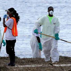 A clean-up crew with the Environmental Protection Agency picks up dead nutria Sunday, Sept. 2, 2012 that had washed onto the beach in Bay St. Louis, Miss. following Hurricane Isaac. Officials estimated nearly 16,000 nutria carcasses washed ashore along the Coast.