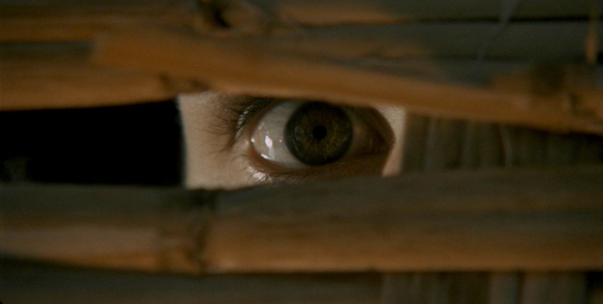 A bay of blood eye looks out the blinds