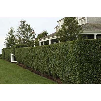 Hedges placed around a garden to block the view from the outside.
