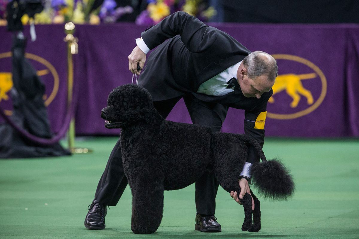 Westminster Dog Show Sporting Group Results