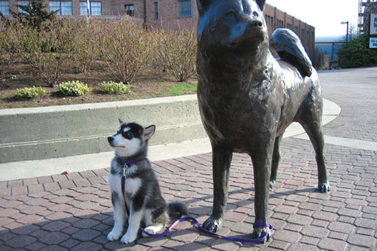 University Of Washington Huskies >> The Academic Success Of Washington Athletics How The Huskies Have