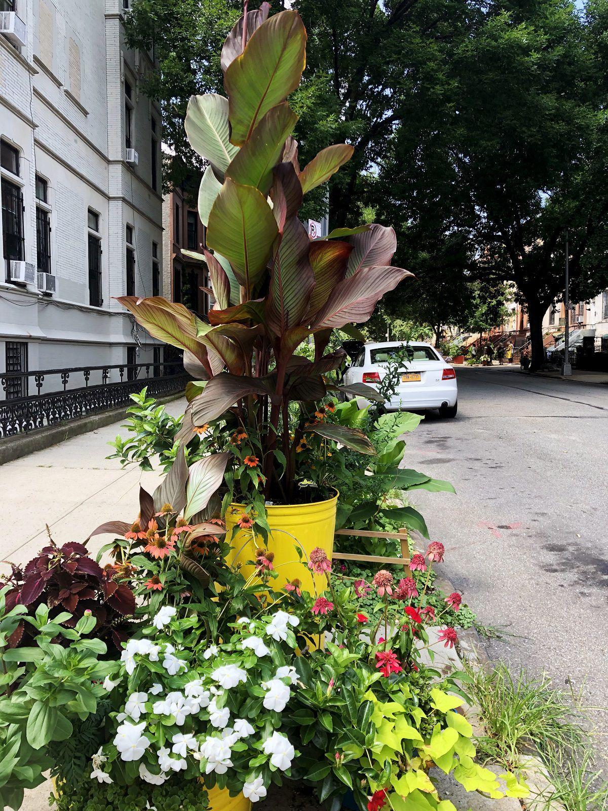 A variety of plants decorating a sidewalk.