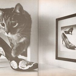 The cat's name is Kurtis; the shoes are ridiculous