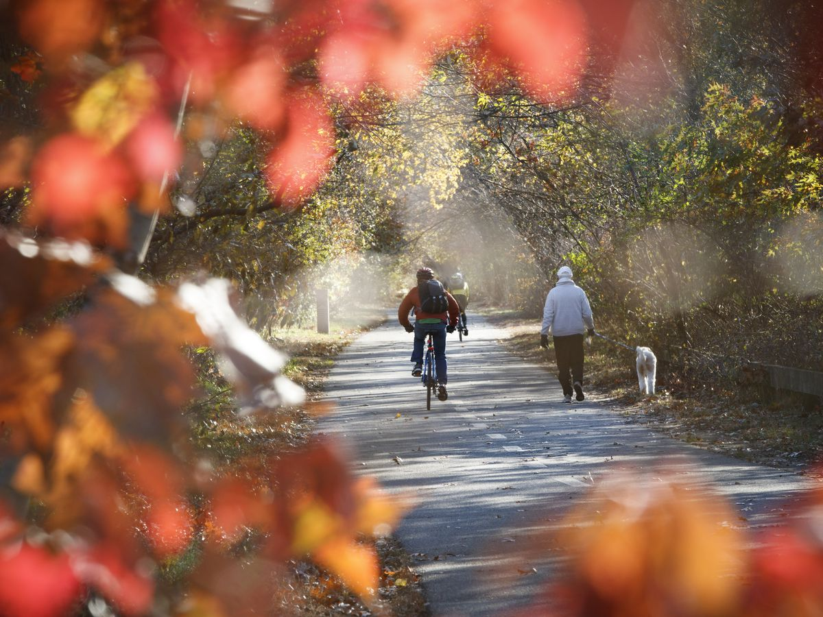 The view, framed by leaves, of people biking and walking along a path.
