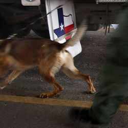 Border Patrol agent Juan Cantu and his dog Cash search vehicles at the Javier Vega Jr. Checkpoint in Sarita, Texas, on Wednesday, June 23, 2021.
