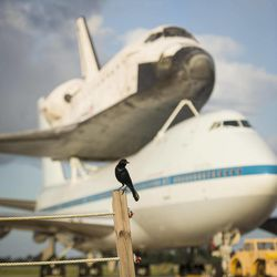 This photo provided by NASA shows a bird near space shuttle Endeavour atop NASA's Shuttle Carrier Aircraft, or SCA, at the Shuttle Landing Facility at NASA's Kennedy Space Center on Monday, Sept. 17, 2012 in Cape Canaveral, Fla. The beginning of Endeavour's final flight to California has been postponed because of weather along the flight route. NASA had planned for the 747 carrying the shuttle to take off from Kennedy Space Center on Monday.