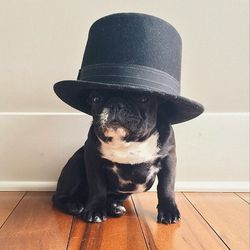 """<b>Winter</b> (<a href=""""http://www.instagram.com/winter"""">@winter</a>)<br> Winter is Trotter's equally-stylish little brother, who has been known to steel Trotter's hats. While not as popular as sis (Trotter has more than 200,000 Instagram followers; Wint"""