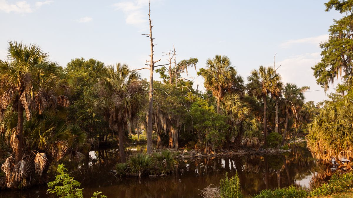 New Orleans\' City Park attractions - Curbed New Orleans