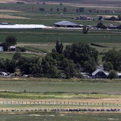 Cyclists compete in Stage 1 of the Tour of Utah outside of Trenton, Cache County, on Tuesday, Aug. 13, 2019.