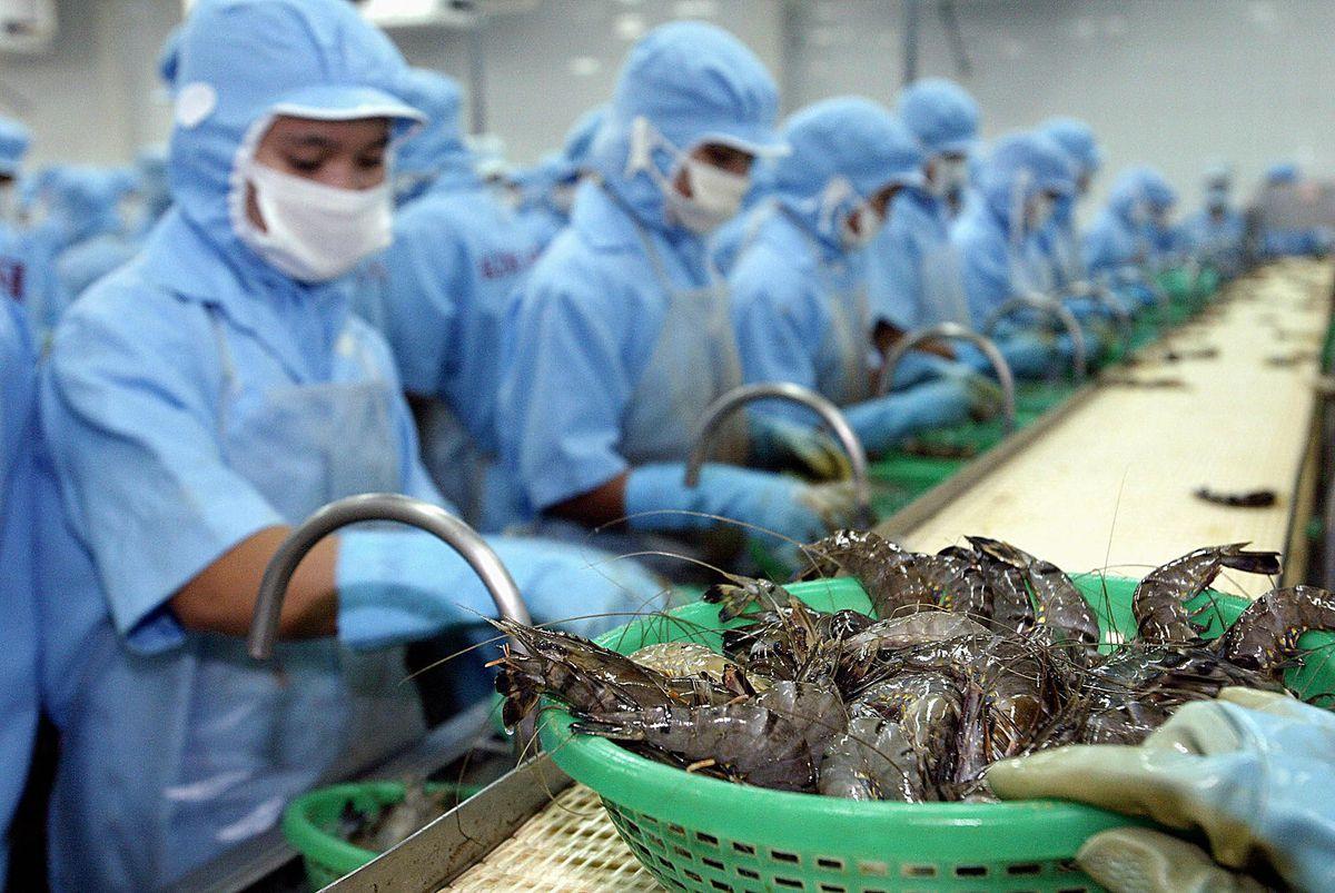 Vietnamese shrimp processing factory