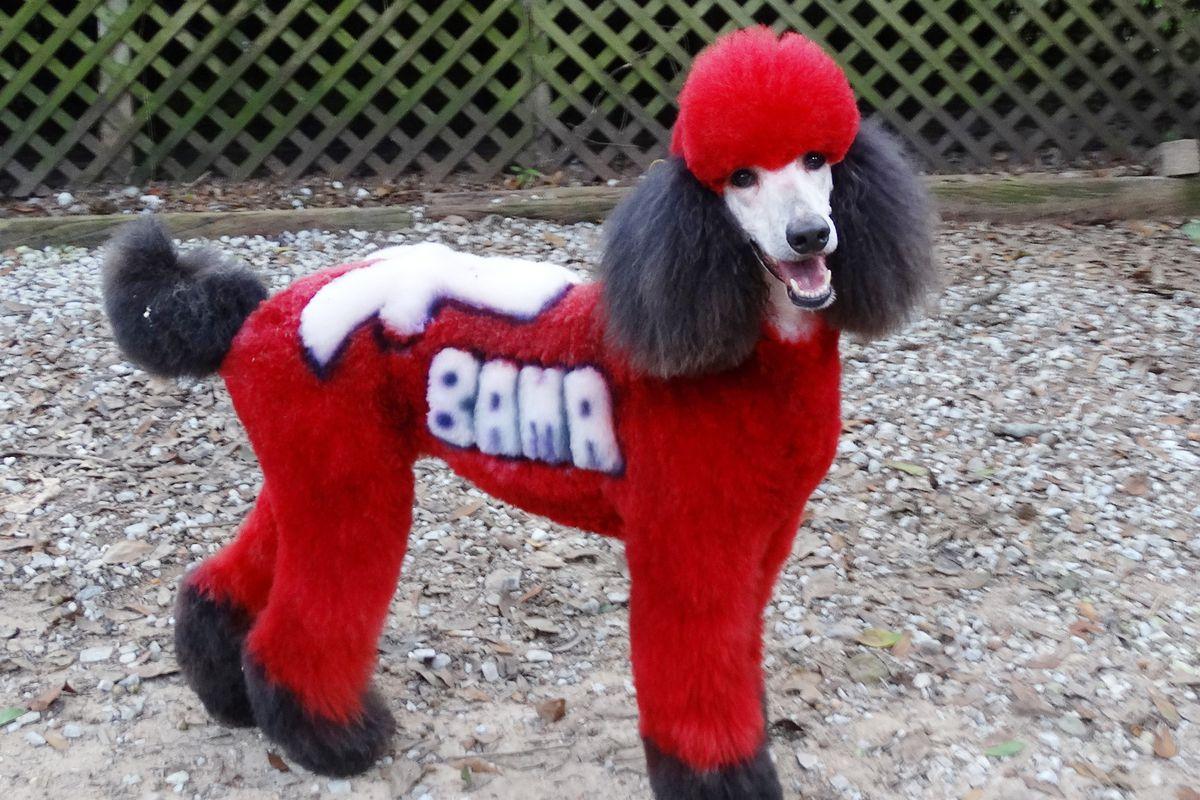 gump dog