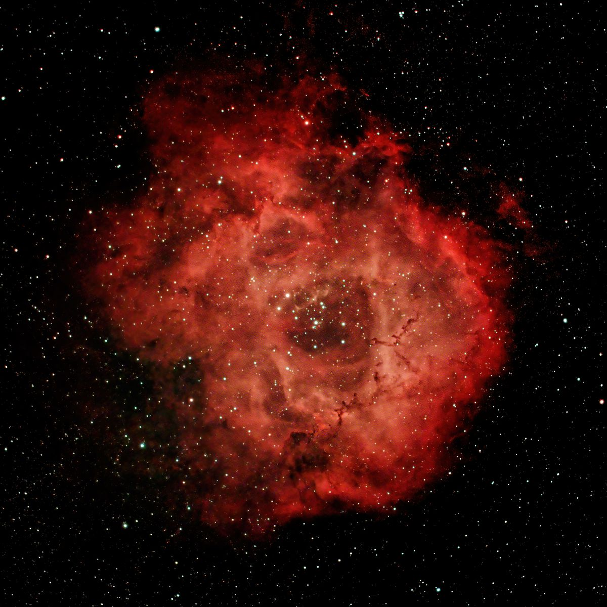 Image of the Rosette Nebula, captured by Gian Lorenzo Ferretti in University Village and posted on his Instagram on March 3.