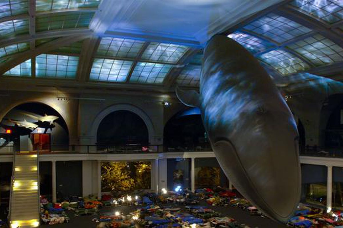 American Museum Of Natural History Sleepover Program