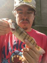Jeffrey Williams with a rare summer perch from the Chicago River. Provided photo