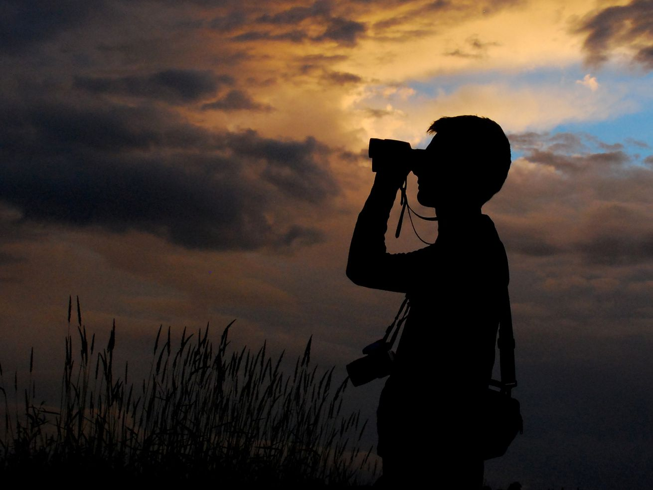 Enjoy bird-watching? Help biologists gather information during annual bird count
