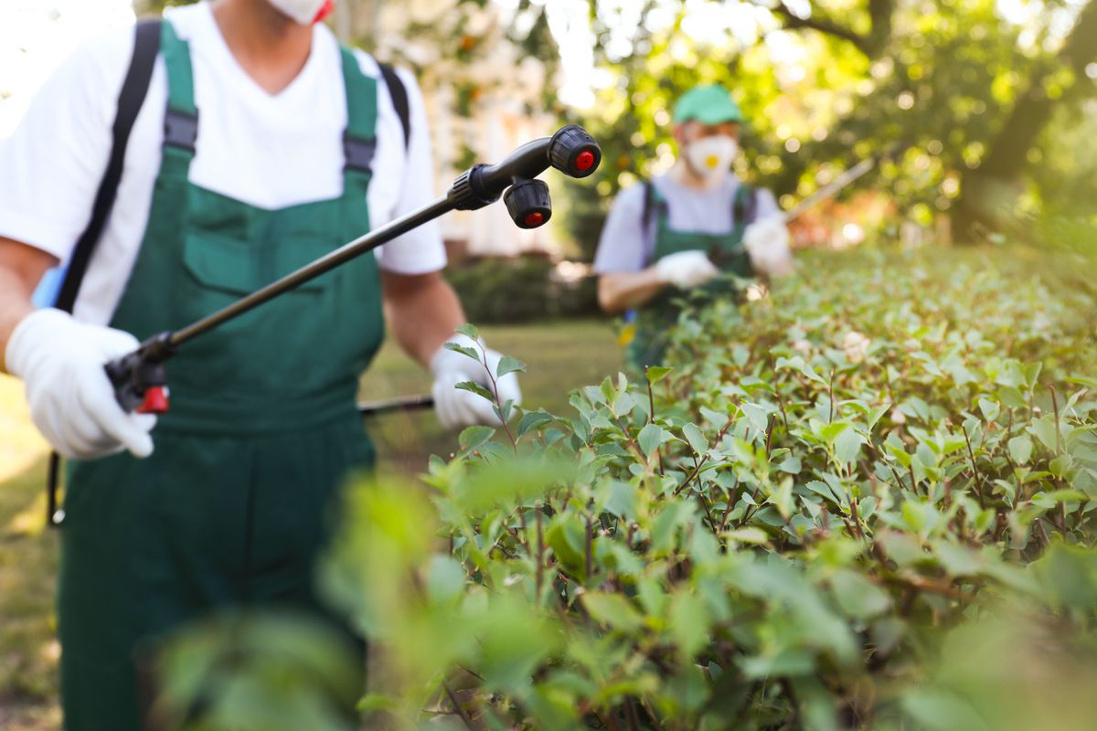A pest control specialist wearing a white t-shirt, dark green overalls, and white gloves uses a black wand to spray pest control solution on green shrubs.
