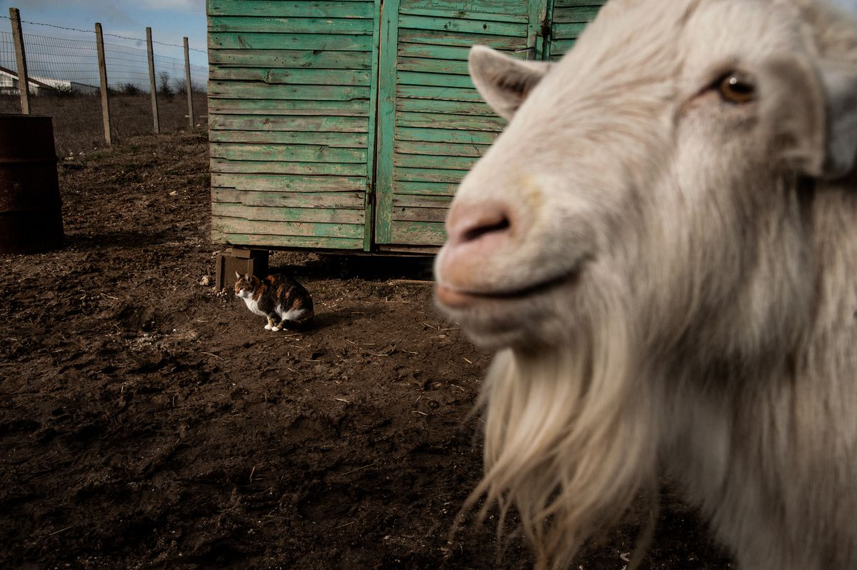 Bulgarian Woman Saves Stray Cats