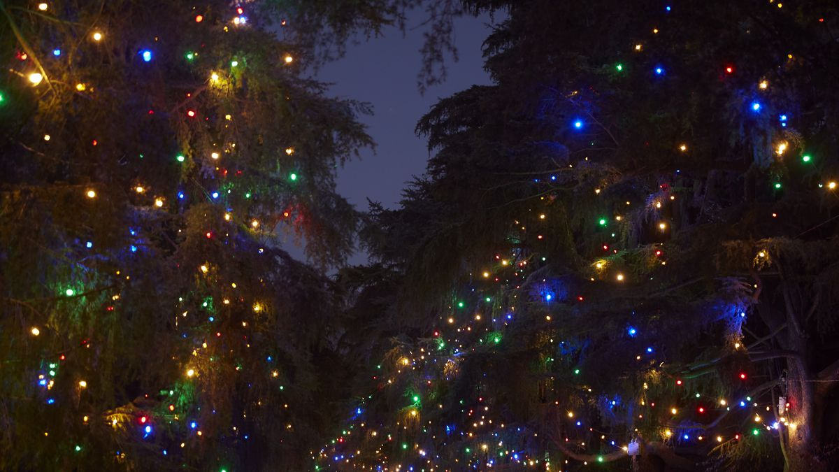 Christmas Tree Lane.The Spectacle Of Altadena S Christmas Tree Lane Curbed La