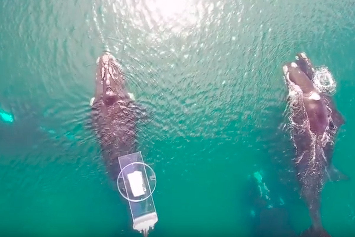 Photo of drone capturing whale snot