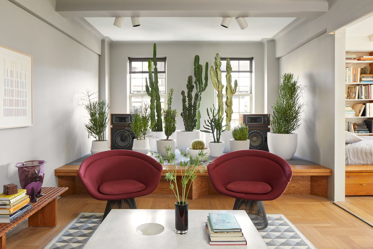 A living area. There are two dark red arm chairs, a white coffee table, wooden floors, and a grey and white patterned area rug. There are windows on the far wall. In front of the windows are multiple houseplants in planters.