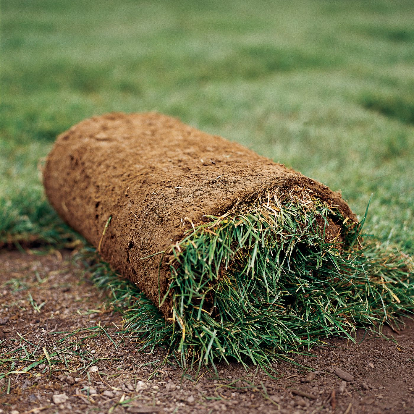 How To Lay Sod In 7 Easy Steps This Old House