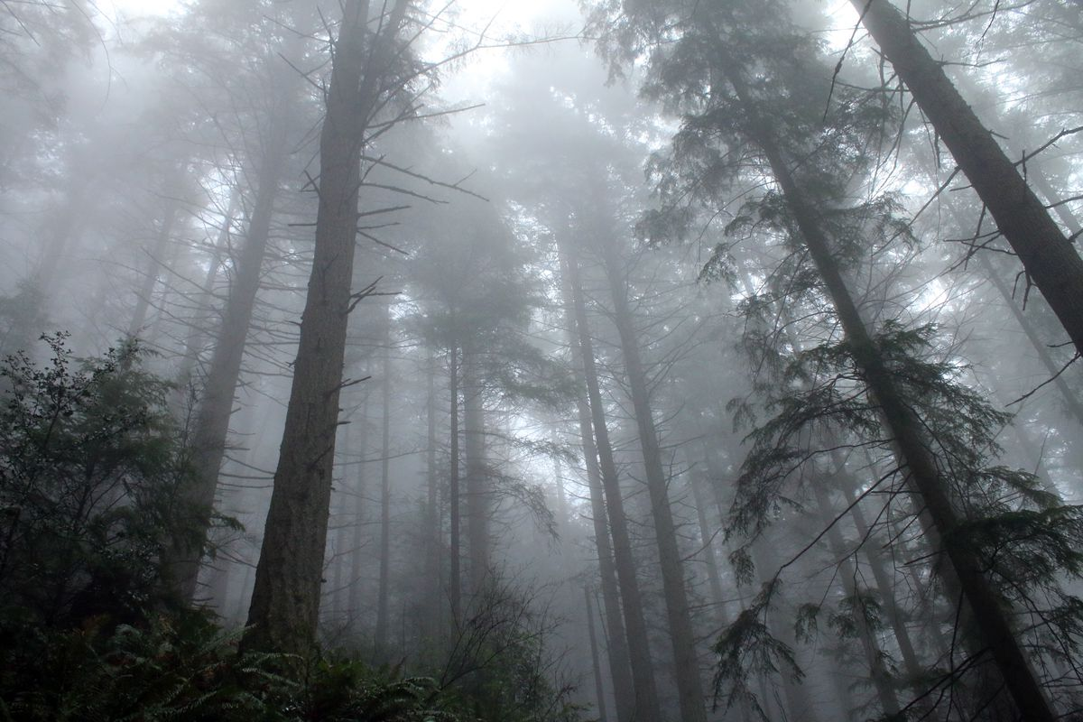 Liminal Seattle maps the Northwest's strange and