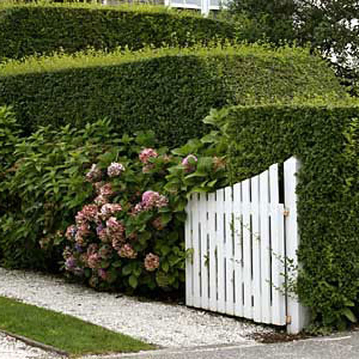 The Privet Hedge This Old House