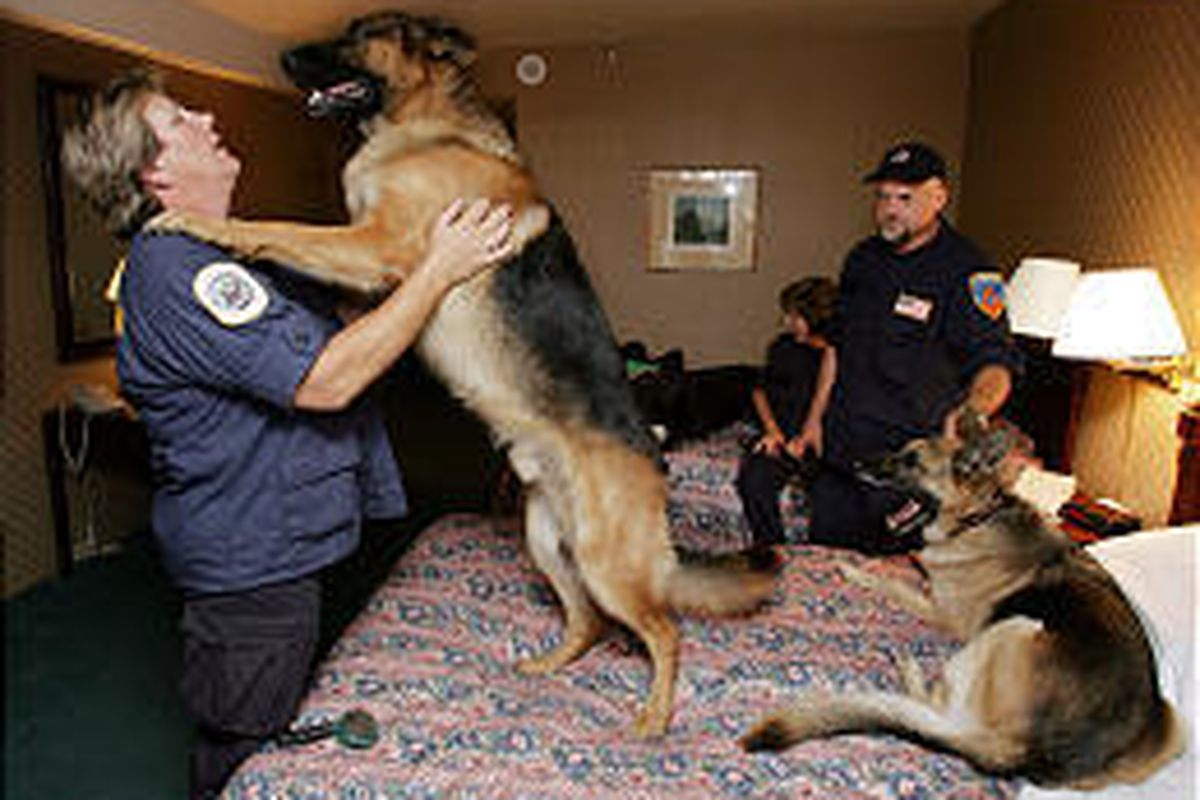 Utah Search and Rescue member Mary Lehman gets a friendly greeting from her dog, Phoenix, in her hotel room Friday evening in Dallas.