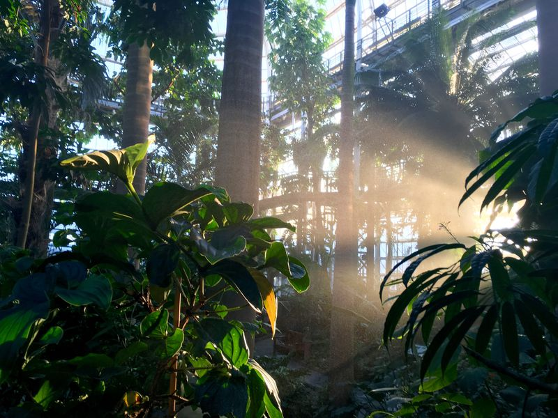 The Tropics exhibit at the US Botanic Garden in Washington, DC.