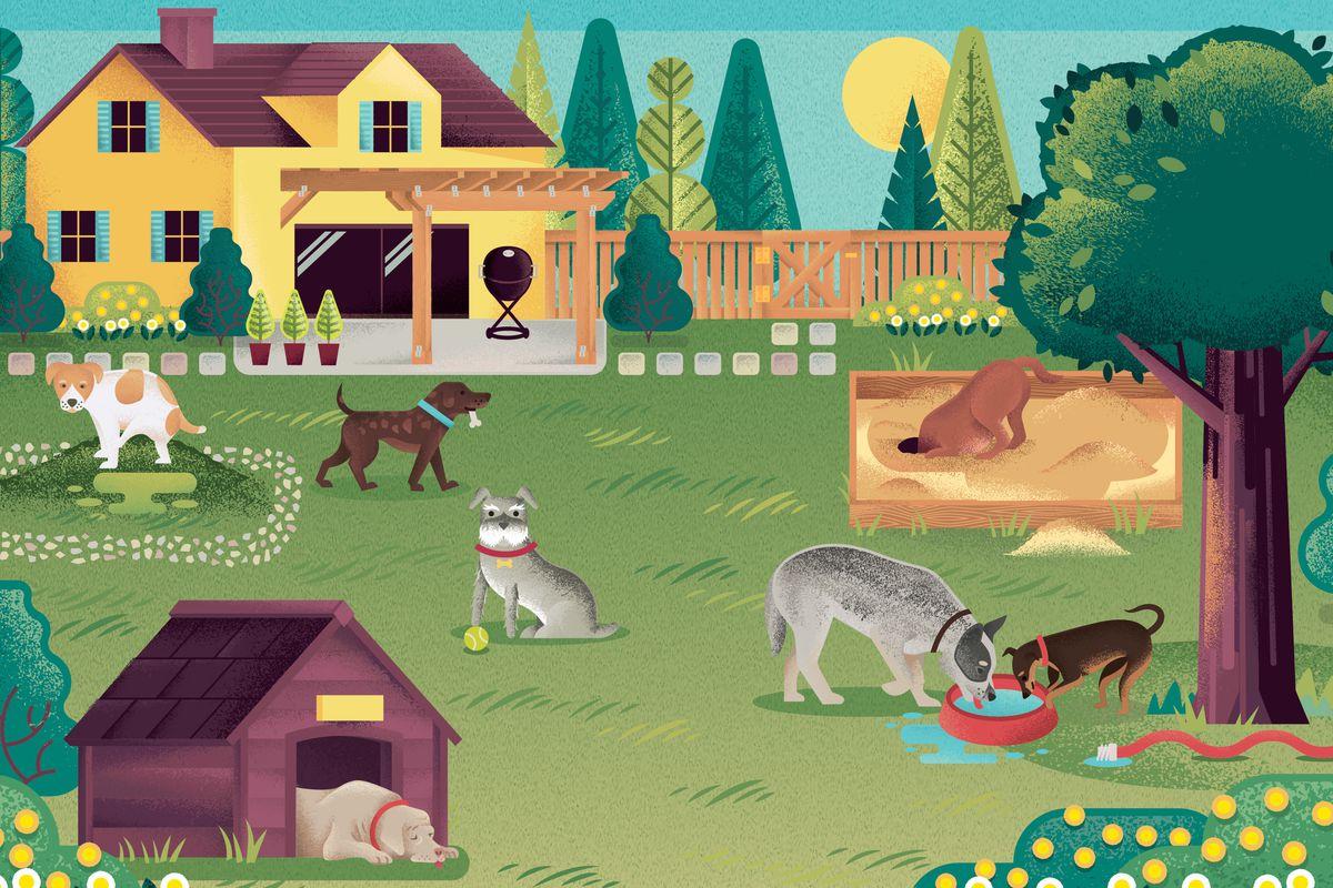 Summer 2021, Animal House, dog-friendly yard illustrated