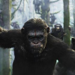 """""""War for the Planet of the Apes,"""" the sequel to """"Dawn of The Planet of the Apes"""" will be released later this summer."""
