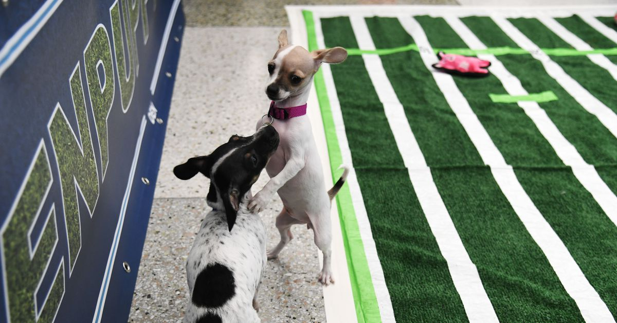 Puppy Bowl 2018 Live Stream Time Tv Schedule Lineups