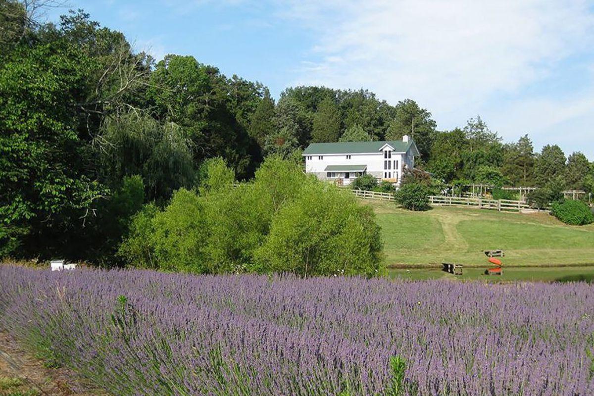 Organic farm in North Carolina