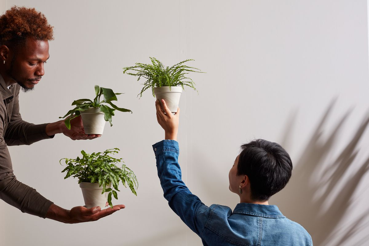 A woman holds a plant in her left hand, while a man holds a plant in each hand.