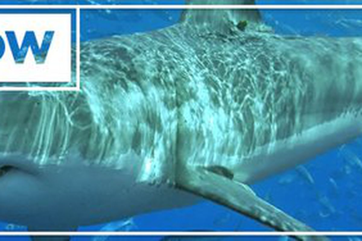 15 Shark Facts You WON'T Learn From Shark Week