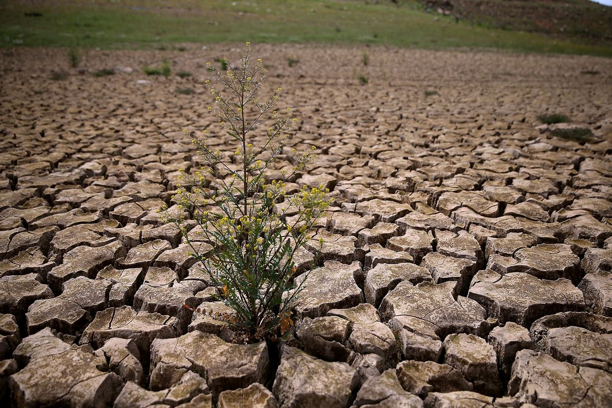 Weeds grow in dry cracked earth that used to be the bottom of Lake McClure on March 24, 2015 in La Grange, California..