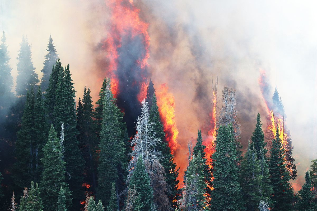 FILE - Trees burn in the Coal Hollow Fire on Thursday, Aug. 9, 2018. Thanks to a brief but helpful break from Utah's dry summer conditions, firefighters have continued to tighten their control of the Coal Hollow Fire.