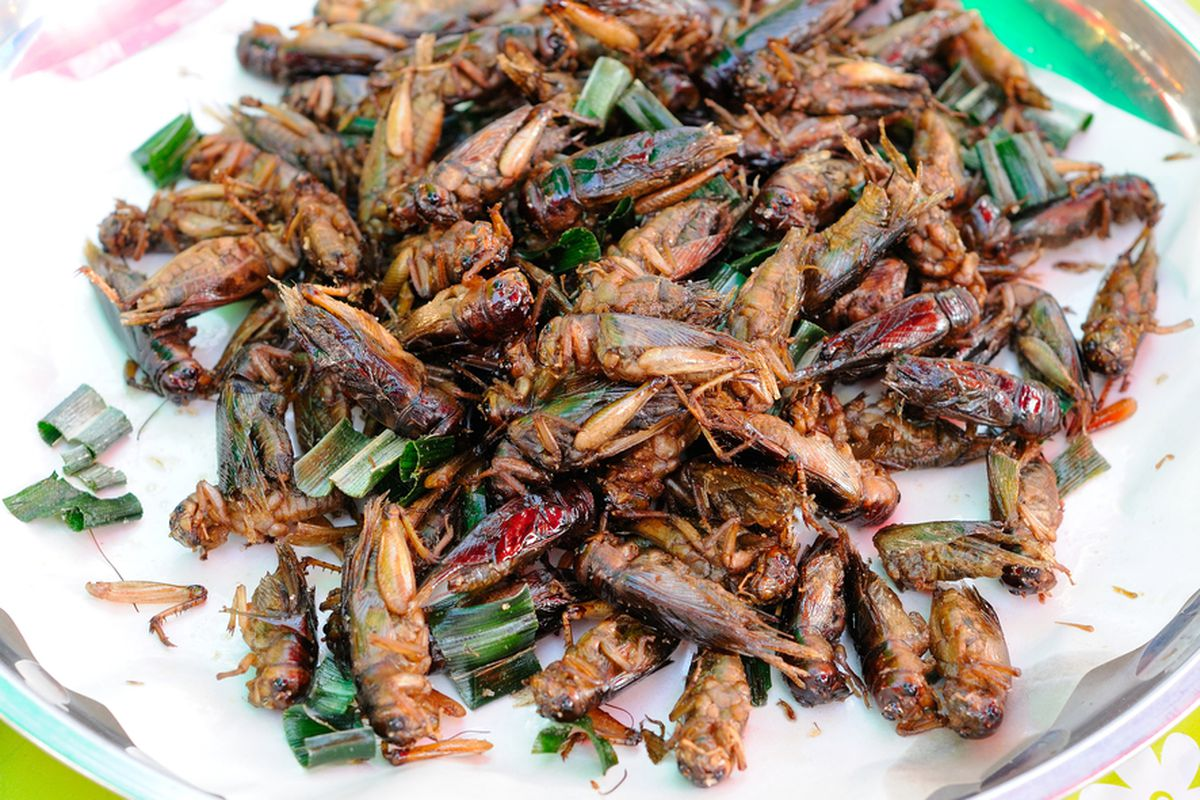 What Will It Take For Americans To Eat Insects Eater