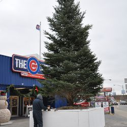 The Cubs holiday tree being set up on the northwest corner of Clark and Addison just outside of the Cubs Store