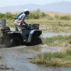 Seth Summerhays, a vector control technician with the Salt Lake City Mosquito Abatement District, rides a four wheeler as he and co-worker Sean Anderson spread larvicide at the Rudy Duck Club in North Salt Lake on Monday, May 11, 2020.