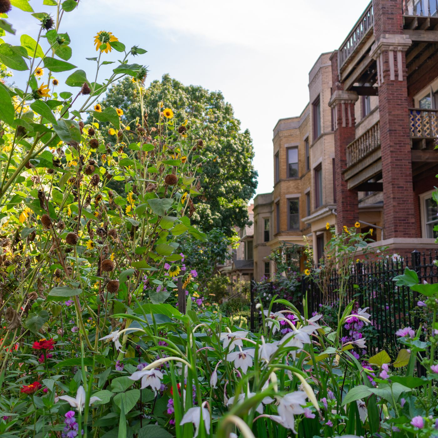 Chicago Landscaping Ideas For Front Yards Gardens Spring Plants Curbed Chicago