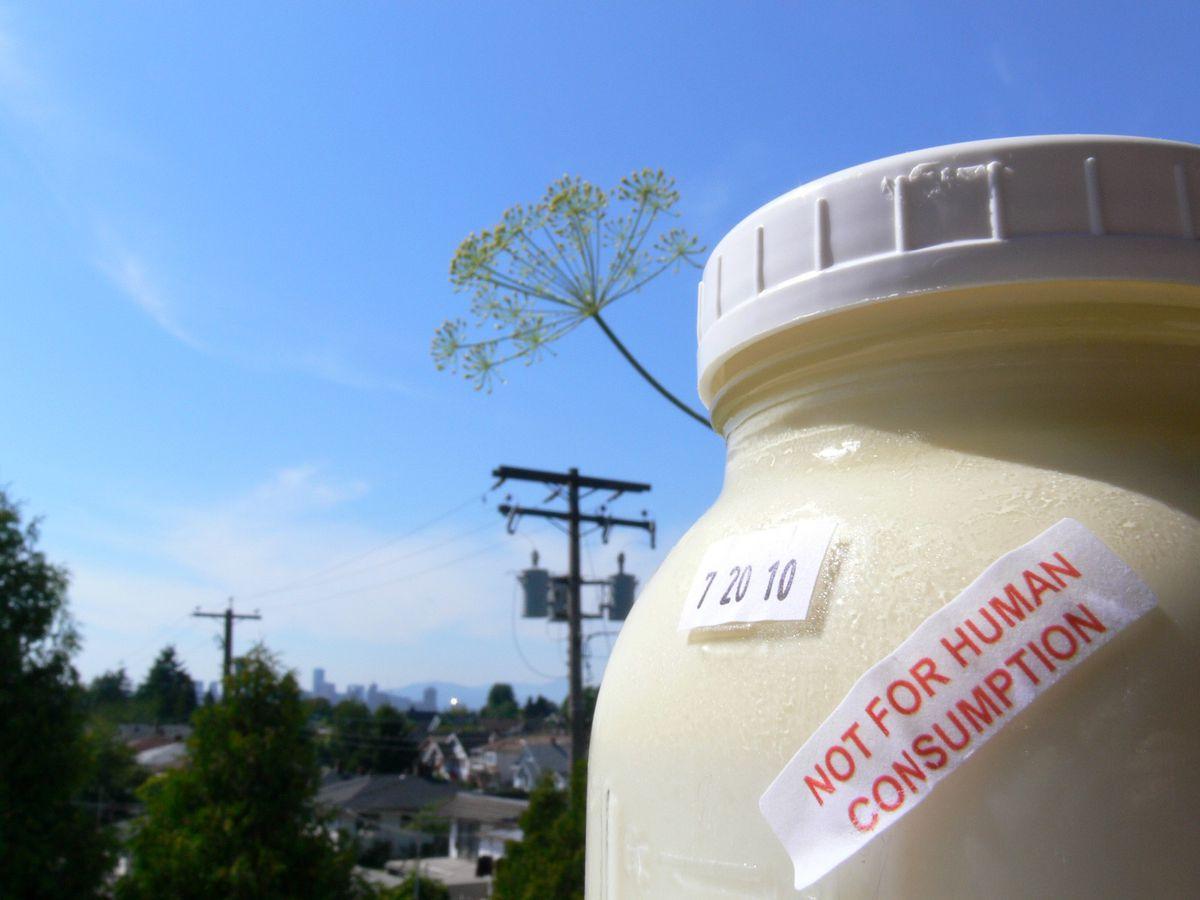 raw milk 5